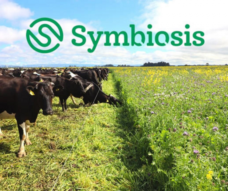 Symbiosis cow images